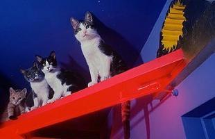 As passarelas feitas para os pets podem ser coloridas