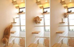 Várias prateleiras foram instaladas na parede para os pets se locomoverem