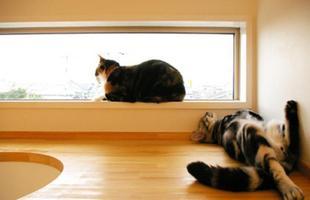 Os gatinhos descansam na passarela instalada perto do teto