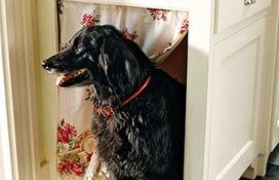 O armário da cozinha também é a casinha desse cachorro