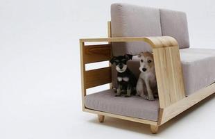 O braço do sofá é o sofá desses cachorrinhos