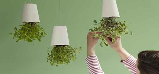 Os vasinhos, pendurados de cabeça para baixo, economizam espaço e são práticos - Boskke/Divulgação