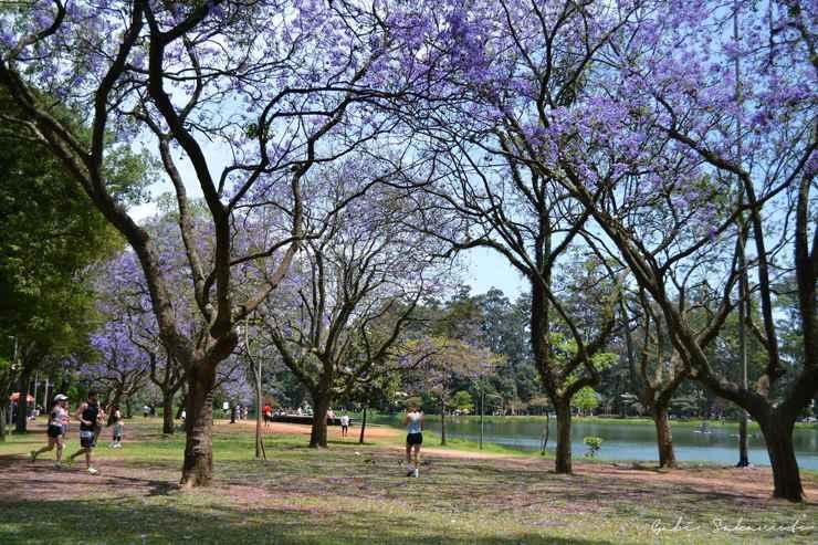 G.Sakamoto/Parque Ibirapuera/Facebook