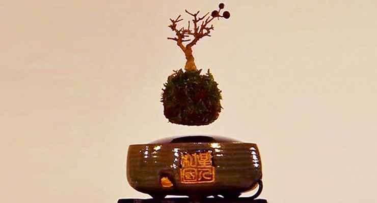 Hoshinchu Air Bonsai Garden