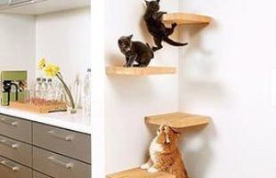 Projetada pelo arquiteto japonês Asahi Kasei, esta casa tem uma escadinha feita de ripas de madeira que leva os gatinhos até prateleiras fixadas no alto