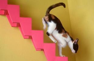 Bastante hiperativos, os gatos adoram as escadinhas