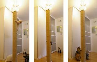 Que tal escalar? A coluna foi revestida para os gatinhos se exercitarem