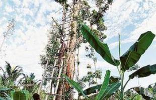 Casa na árvore construída pela tribo Kombai, na Indonésia