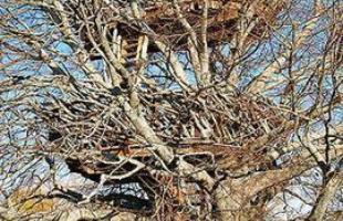 Do estúdio Roderick Wolgamott Romero, a Lake-Nest Tree House está localizada em Nova York, nos EUA