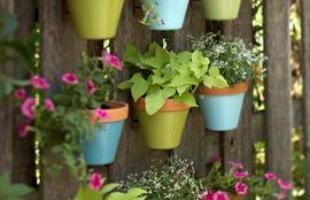 A escolha das plantas é determinada pelo grau de isolação do lugar e também pelo espaço disponível