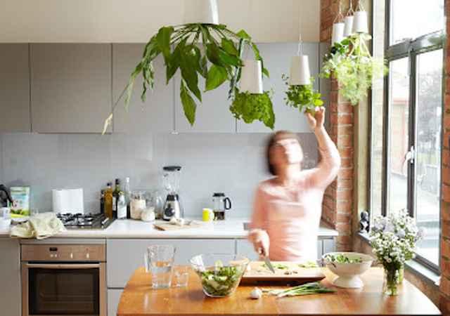 A dica é colocar os vasinhos pendurados na cozinha perto da pia e da janela - Reprodução/Internet