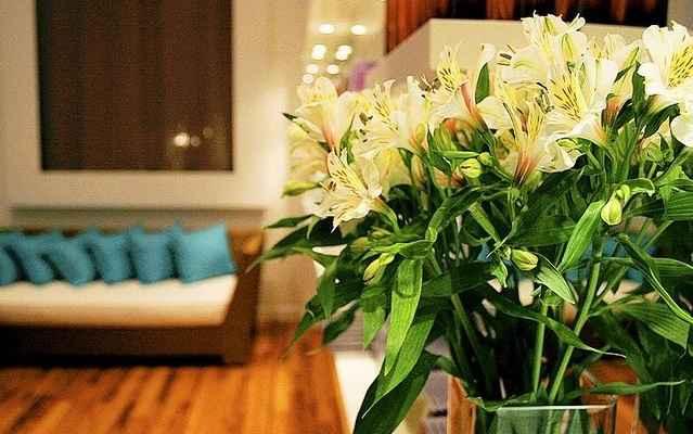 A Astromélia é uma ótima opção de flor para decorar, além de lindas são duráveis   - Eladio Machado/Divulgação
