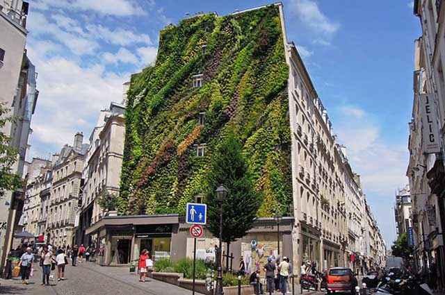O projeto do botânico consiste em implementar vegetação em fachadas e paredes de vários edifícios pelo mundo - Divulgação/Vertical Garden