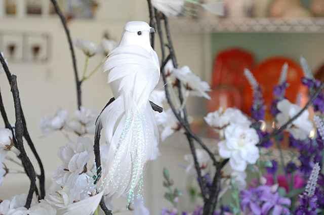 As aves transmitem a sensação de paz e liberdade, como este pássaro branco - Carlos Altman/EM/D.A Press