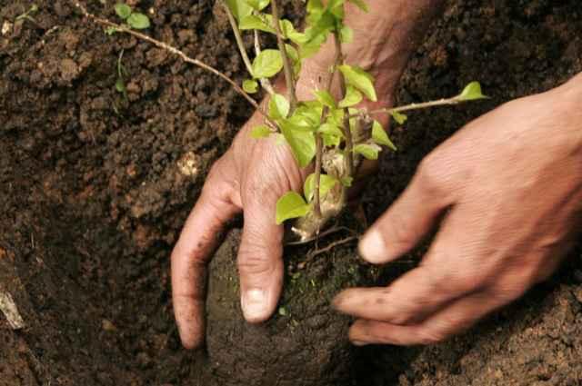 A prática da jardinagem é uma alternativa relaxante, que propõe maior contato com a natureza, além de manter os jardins bonitos e bem cuidados - Igo Estrela/CB/D.A Press