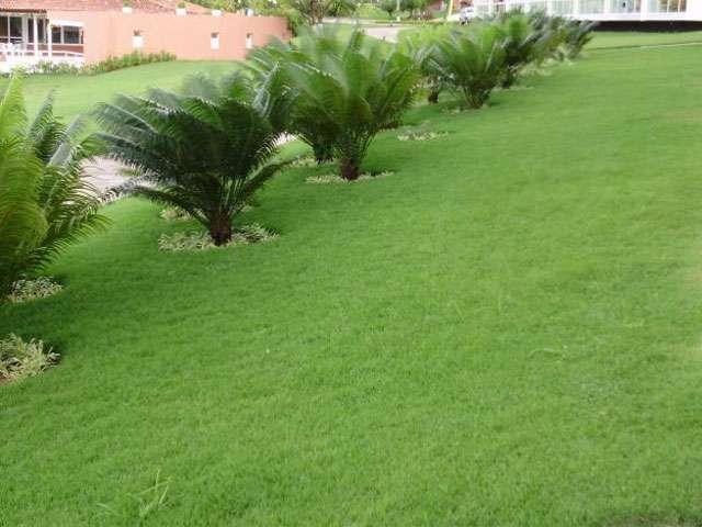 No verão o gramado cresce rapidamente e, para que se mantenha saudável e bonito alguns cuidados devem ser tomados - Reprodução Internet/Blog Jardim das Ideias