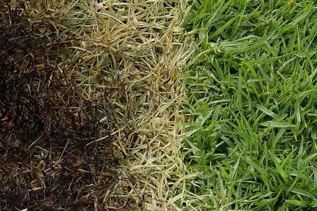 As plantas daninhas acabam com a beleza uniforme de qualquer gramado e para evitá-las a prevenção ainda é o melhor remédio - Reprodução Internet/Blog Jardim das Ideias