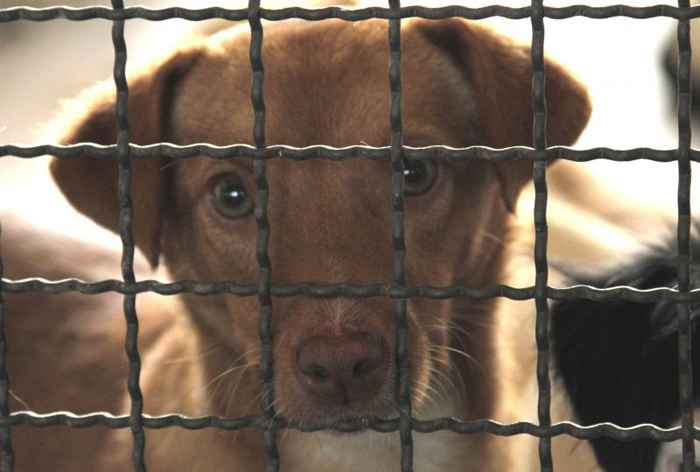 Os animais serão castrados e vacinados por uma ONG antes da adoção - Viola Júnior/Esp. CB/D.A Press